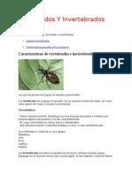 Vertebrados Y Invertebrados