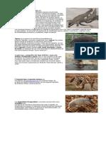 5 Animales en Extincion en Guatemala