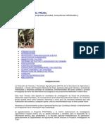el-cultivo-del-frijol.pdf