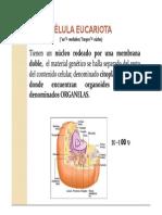 Celula Eucariota. organelas