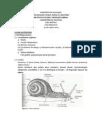 Aula Prática Mollusca
