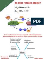 aula-4---fermentacao-e-ciclo-acido-citrico.pdf