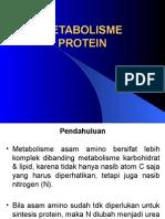 3-metabolisme-protein.ppt