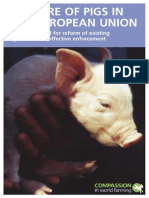 Welfare of Pigs in the European Union