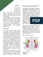 REFLEXOLOGIA - REFLEXOTERAPIA La Reflexología Practicada Desde