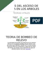 TEORIAS DEL ASCESO DE LA SAVIA - copia.pptx