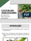 CULTURA DO MORANGUEIRO(1).pdf