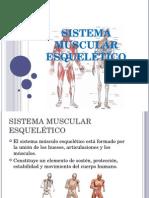 sistema muscualr esqueletico