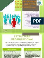 Exposicion de Estructura Organizacional II