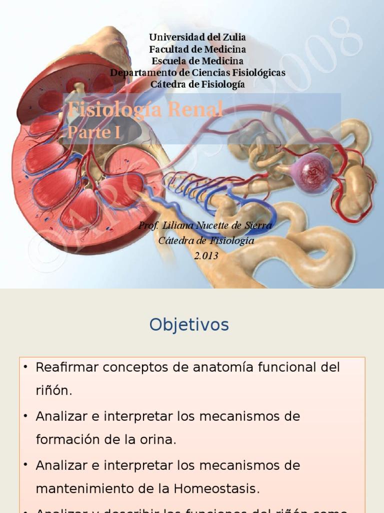 Excepcional Anatomía Y Fisiología De Hoja De Cálculo Composición ...