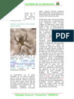 Trabajo de Investigacion sobre la tela de araña