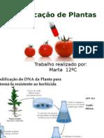 Modificação de Plantas
