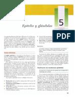 "EPITELIOGartner, Leslie P. - Tex...itelio y glándulas].pdf"""