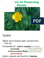 structure of flowering plants xylem 1