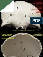 imagini oasele capului.ppt