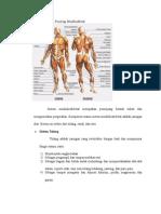 Anatomi Dan Fisiologi Muskluskletal