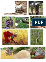 farmer.pptx
