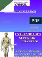 Diapositiva Extremidades Superiores Del Cuerpo Humano MARIA ALEJANDRAS