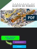 [Lab] Histología - Tejido Conectivo