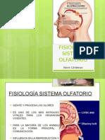 Fisiología Sistema Olfatorio