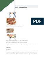 atlas de anatomía topográfica.docx