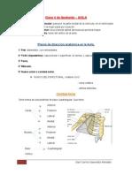 Clase 4 de Anatomía - Degabada