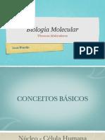Aula 1 Tecnicas Molecular