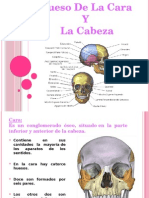Anat Hueso de La Cara y La Cabeza