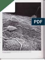 Capítulo 20 - Células germinales y fecundación