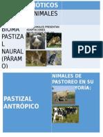 Características Suelos de Pastizal