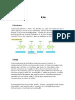 Biologia - RNA