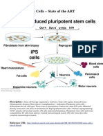 Stem Cells –State of the ART