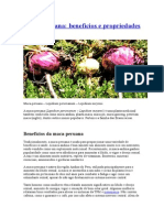 Benefícios Maca Peruana