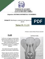Tema VI (Flor) (Botánica General)