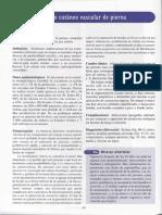 [03] Complejo Cutaneo Vascular de La Pierna
