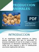La Reproduccion en Animales