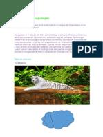 Zoológico de Chapultepec