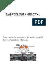Embriologia Genital