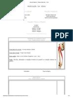 Aula de Anatomia - Sistema Muscular - Coxa