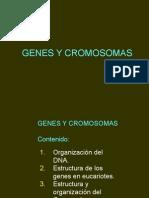 Genes y Cromosomas