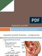 Aparatul Genital (1)