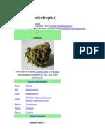 Cannabis.docx