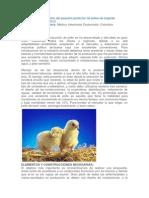 Manual Práctico Del Pequeño Productor de Pollos de Engorde