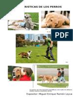 Caracteristicas de Los Perros