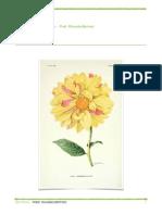 Botânica Completo - Prof. Ricardo