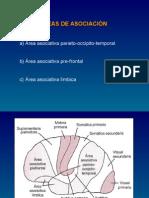 Medicina - Fisiologia. Areas Asociacion