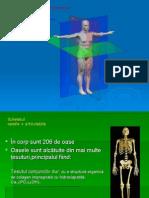 Anatomie Sist Osos