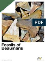 Beaumaris Fossil Book