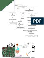 Skema Patofisiologi Demam Typhoid