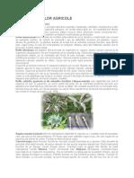 BOLILE PLANTELOR AGRICOLE